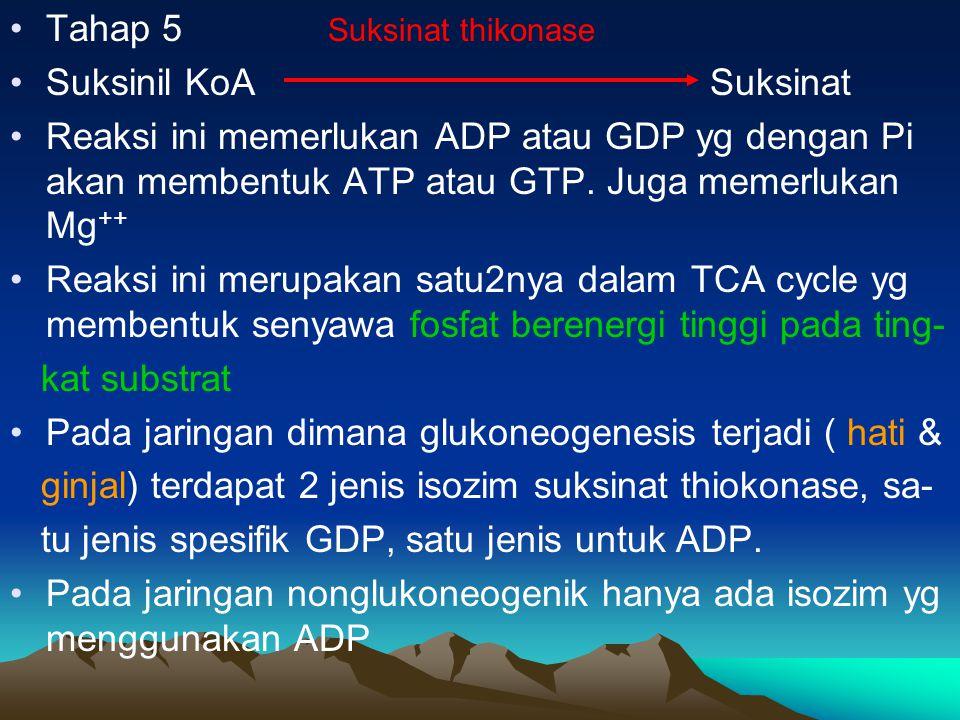 Tahap 5 Suksinat thikonase Suksinil KoA Suksinat Reaksi ini memerlukan ADP atau GDP yg dengan Pi akan membentuk ATP atau GTP. Juga memerlukan Mg ++ Re