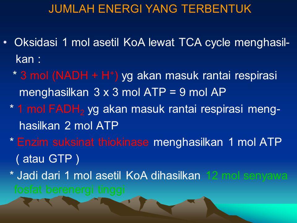 JUMLAH ENERGI YANG TERBENTUK Oksidasi 1 mol asetil KoA lewat TCA cycle menghasil- kan : * 3 mol (NADH + H + ) yg akan masuk rantai respirasi menghasil