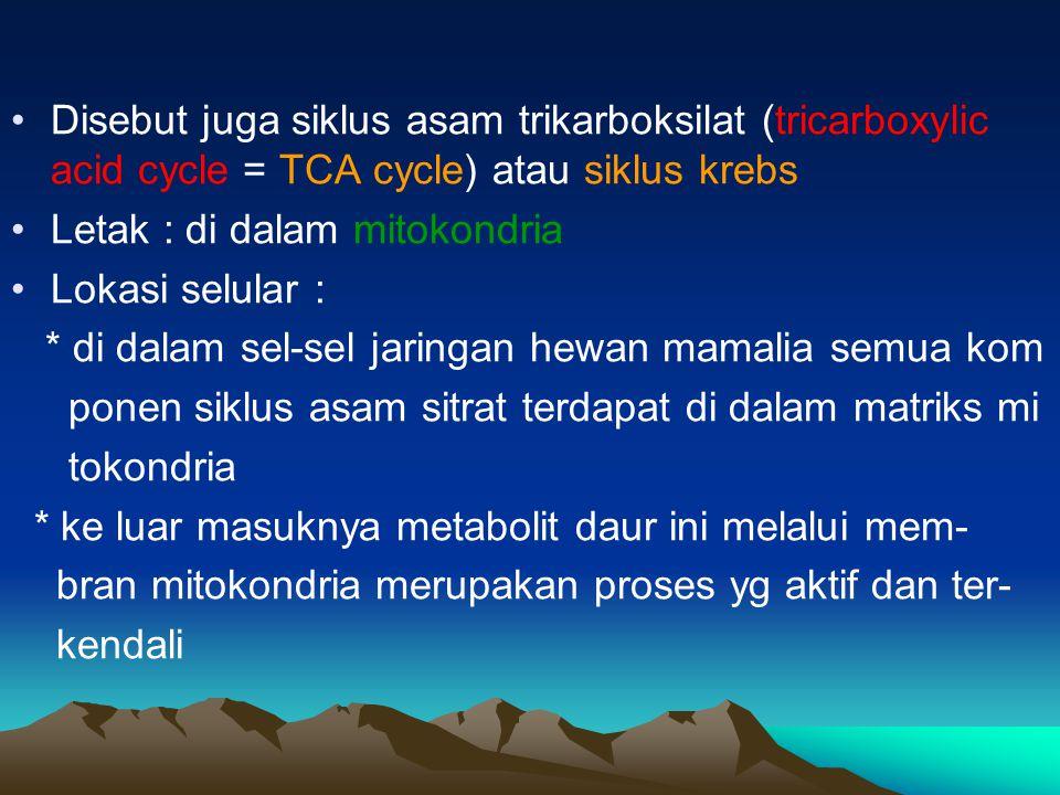 Disebut juga siklus asam trikarboksilat (tricarboxylic acid cycle = TCA cycle) atau siklus krebs Letak : di dalam mitokondria Lokasi selular : * di da