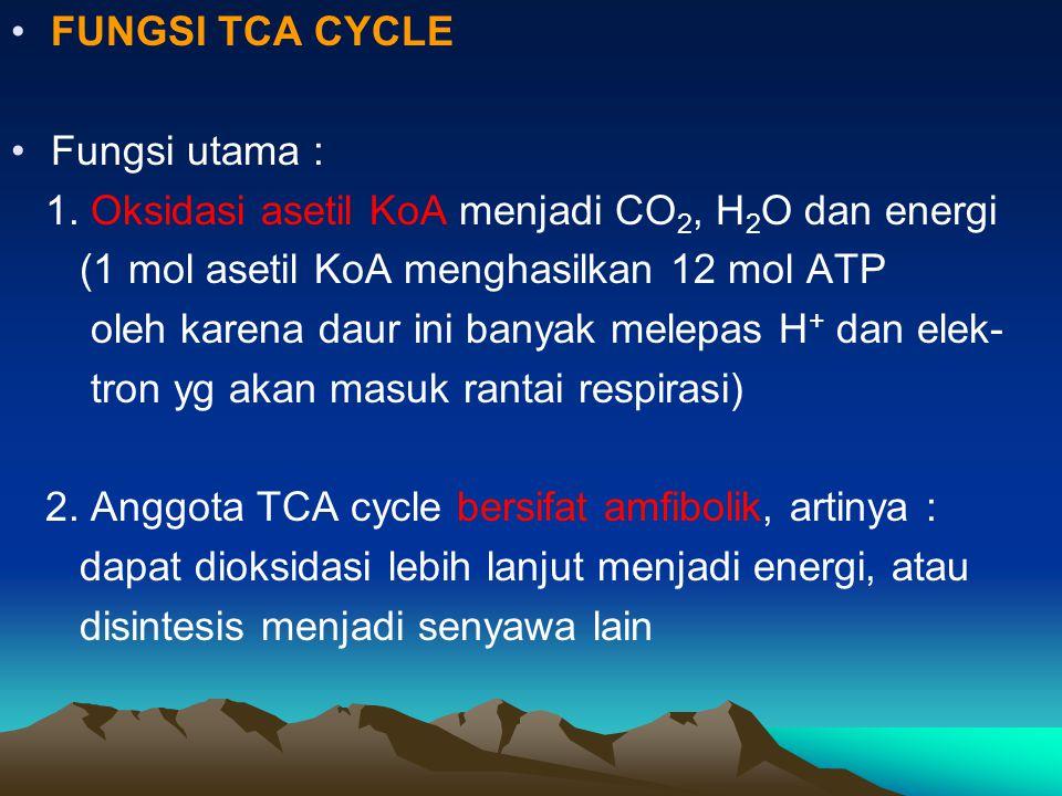 FUNGSI TCA CYCLE Fungsi utama : 1. Oksidasi asetil KoA menjadi CO 2, H 2 O dan energi (1 mol asetil KoA menghasilkan 12 mol ATP oleh karena daur ini b