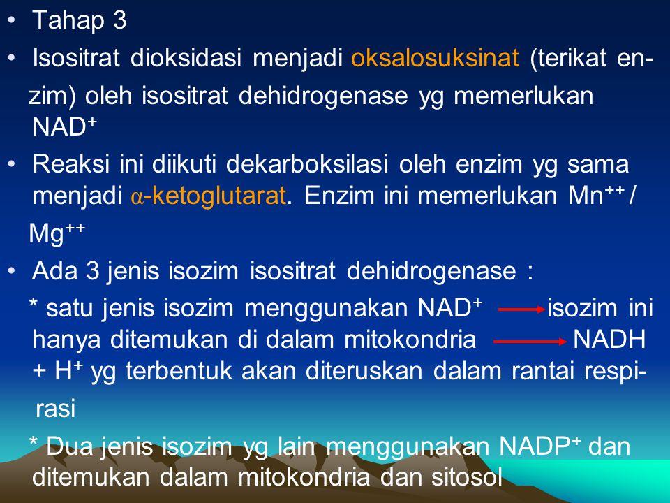 Tahap 3 Isositrat dioksidasi menjadi oksalosuksinat (terikat en- zim) oleh isositrat dehidrogenase yg memerlukan NAD + Reaksi ini diikuti dekarboksila