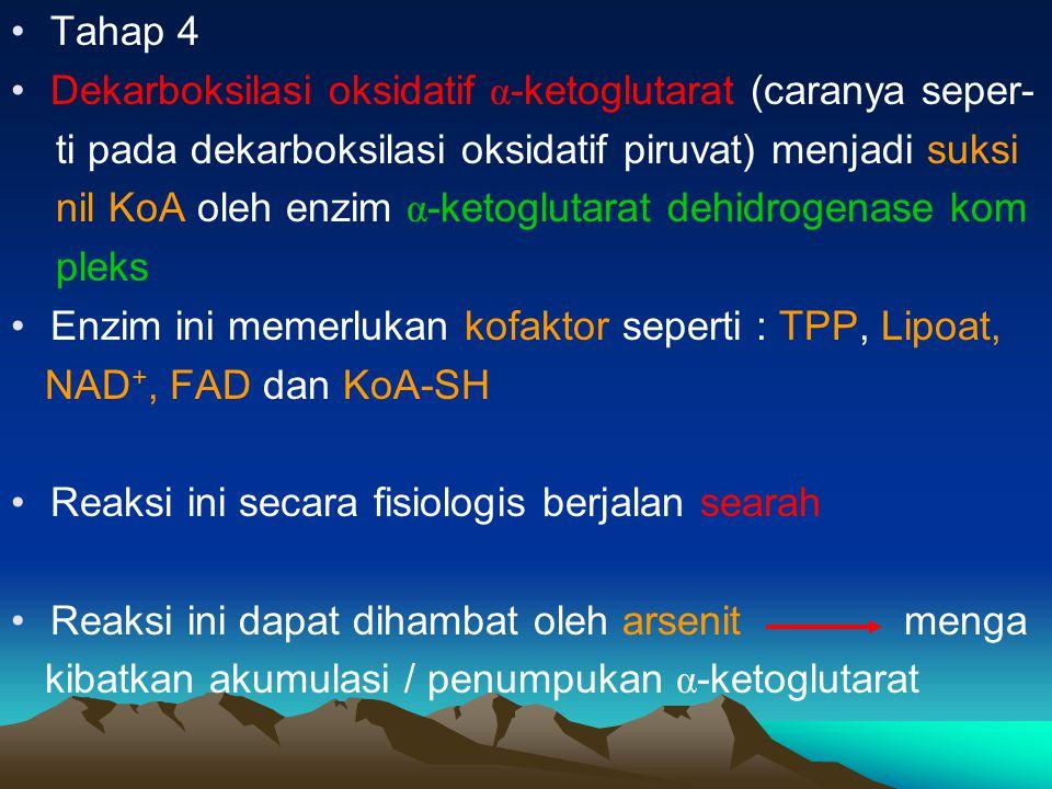 Tahap 5 Suksinat thikonase Suksinil KoA Suksinat Reaksi ini memerlukan ADP atau GDP yg dengan Pi akan membentuk ATP atau GTP.