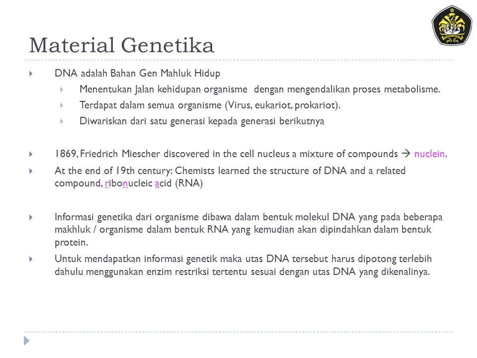 Material Genetika  DNA adalah Bahan Gen Mahluk Hidup  Menentukan Jalan kehidupan organisme dengan mengendalikan proses metabolisme.  Terdapat dalam