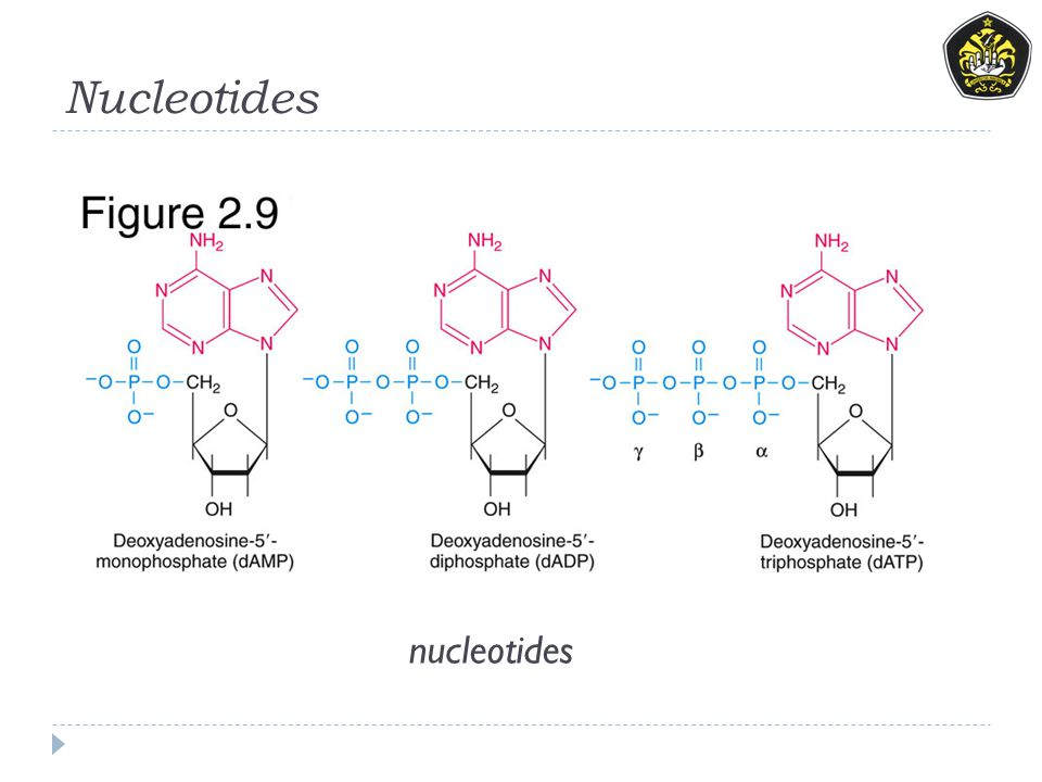 Nucleotides nucleotides