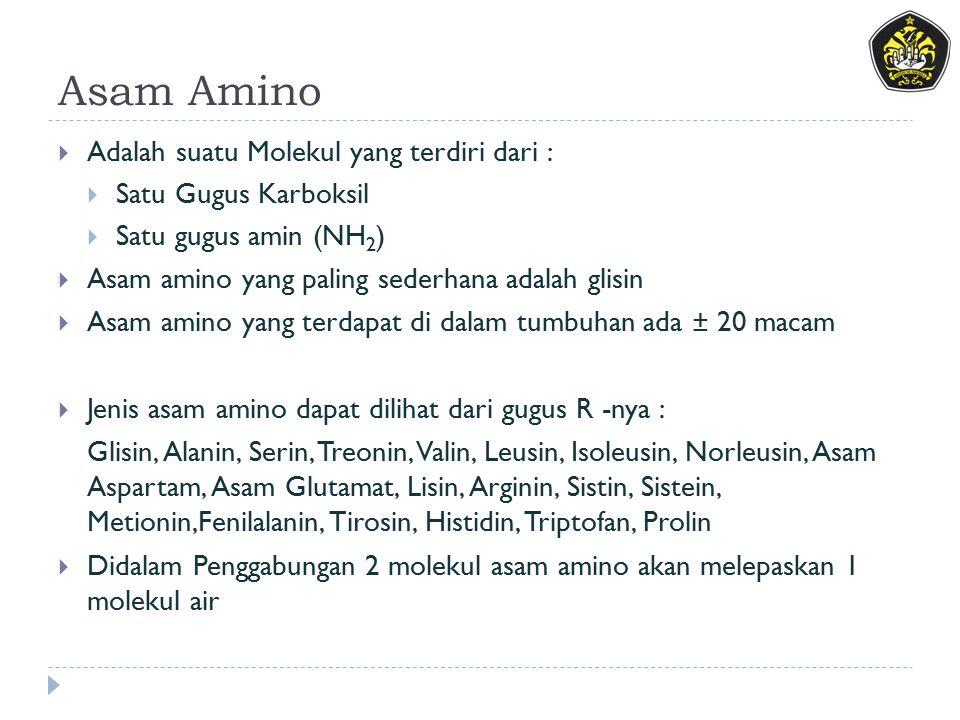 Asam Amino  Adalah suatu Molekul yang terdiri dari :  Satu Gugus Karboksil  Satu gugus amin (NH 2 )  Asam amino yang paling sederhana adalah glisin  Asam amino yang terdapat di dalam tumbuhan ada ± 20 macam  Jenis asam amino dapat dilihat dari gugus R -nya : Glisin, Alanin, Serin, Treonin, Valin, Leusin, Isoleusin, Norleusin, Asam Aspartam, Asam Glutamat, Lisin, Arginin, Sistin, Sistein, Metionin,Fenilalanin, Tirosin, Histidin, Triptofan, Prolin  Didalam Penggabungan 2 molekul asam amino akan melepaskan 1 molekul air