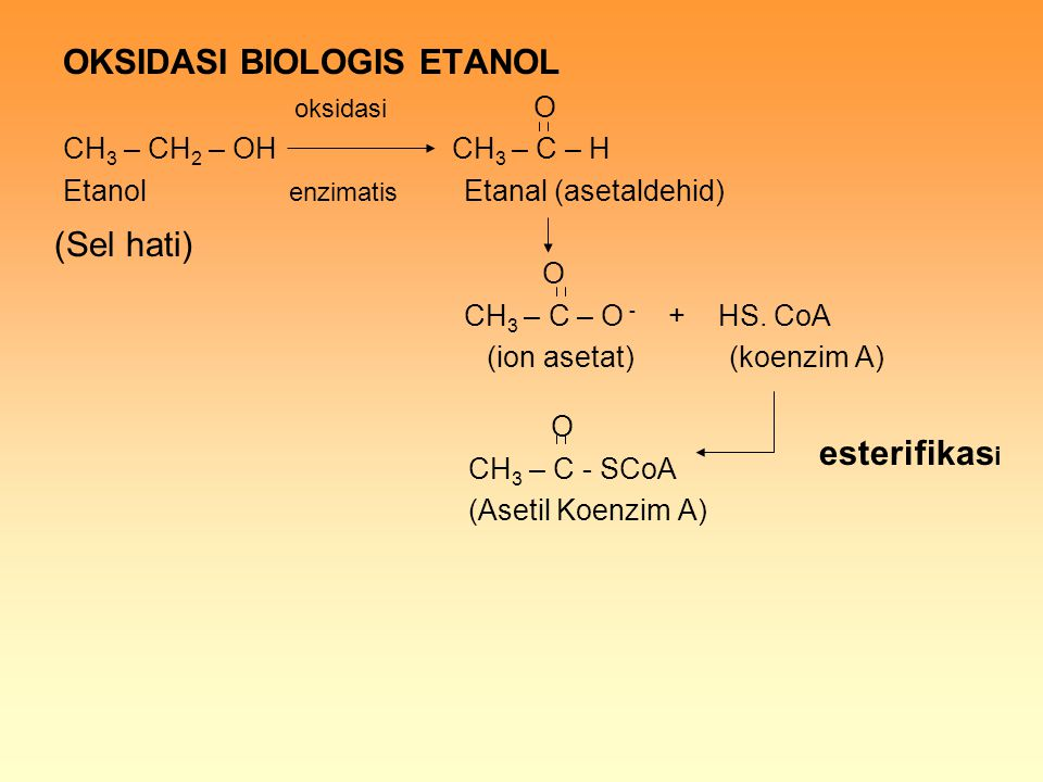 OKSIDASI BIOLOGIS ETANOL oksidasi O CH 3 – CH 2 – OH CH 3 – C – H Etanol enzimatis Etanal (asetaldehid) O CH 3 – C – O - + HS. CoA (ion asetat) (koenz