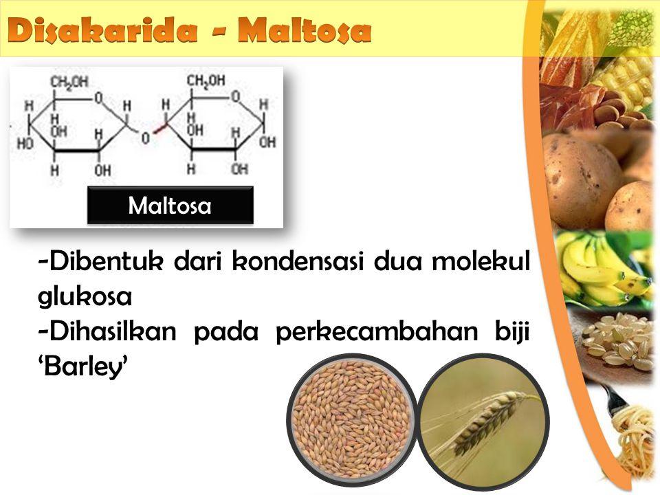 -Dibentuk dari kondensasi dua molekul glukosa -Dihasilkan pada perkecambahan biji 'Barley' Maltosa