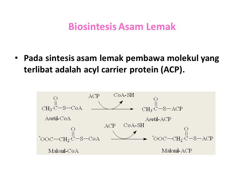 Biosintesis Asam Lemak Pada sintesis asam lemak pembawa molekul yang terlibat adalah acyl carrier protein (ACP).