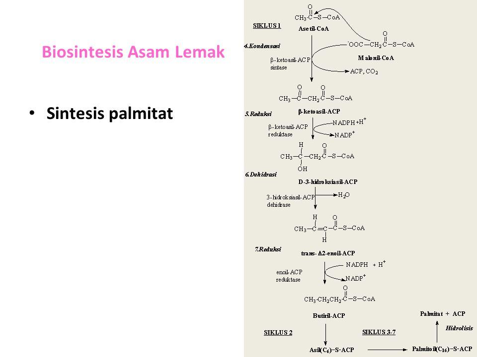Biosintesis Asam Lemak Sintesis palmitat