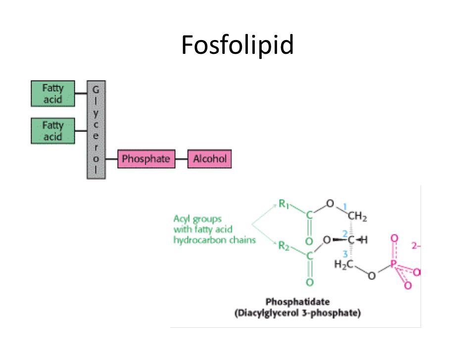 Biosintesis Trigliserida Esterifikasi asam lemak dengan gliserol.