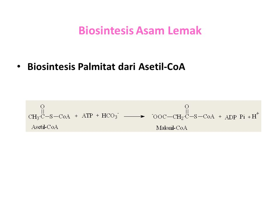 Biosintesis Asam Lemak Biosintesis Palmitat dari Asetil-CoA