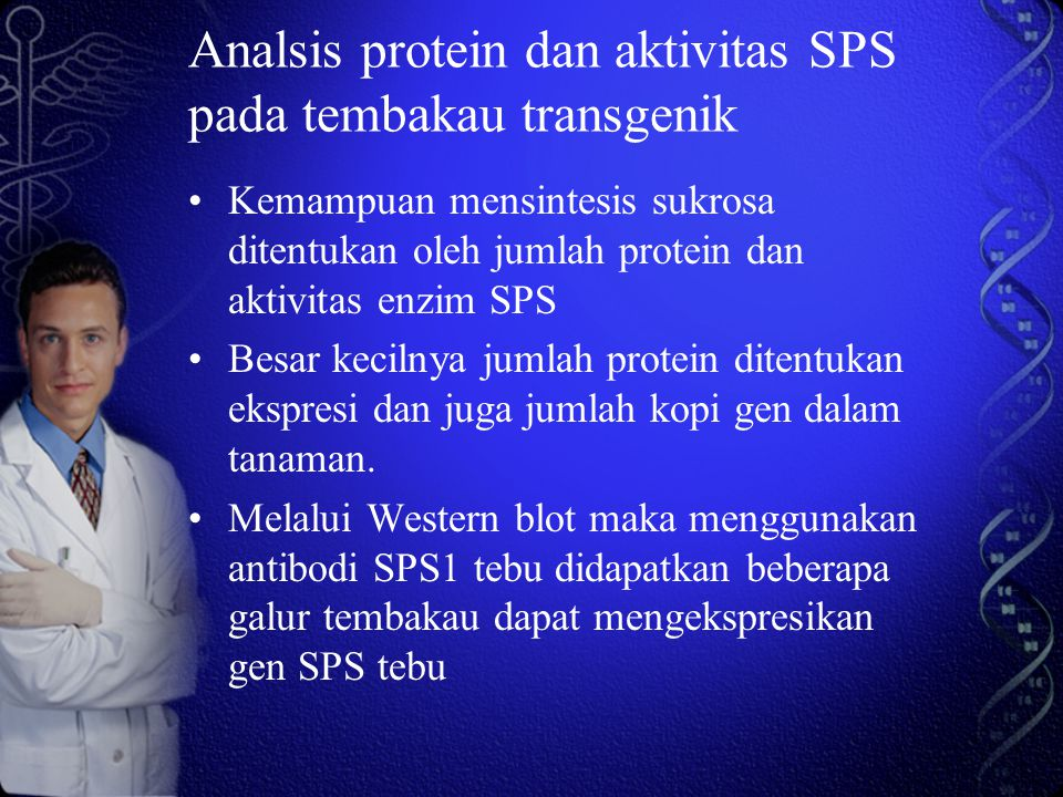 Analsis protein dan aktivitas SPS pada tembakau transgenik Kemampuan mensintesis sukrosa ditentukan oleh jumlah protein dan aktivitas enzim SPS Besar kecilnya jumlah protein ditentukan ekspresi dan juga jumlah kopi gen dalam tanaman.