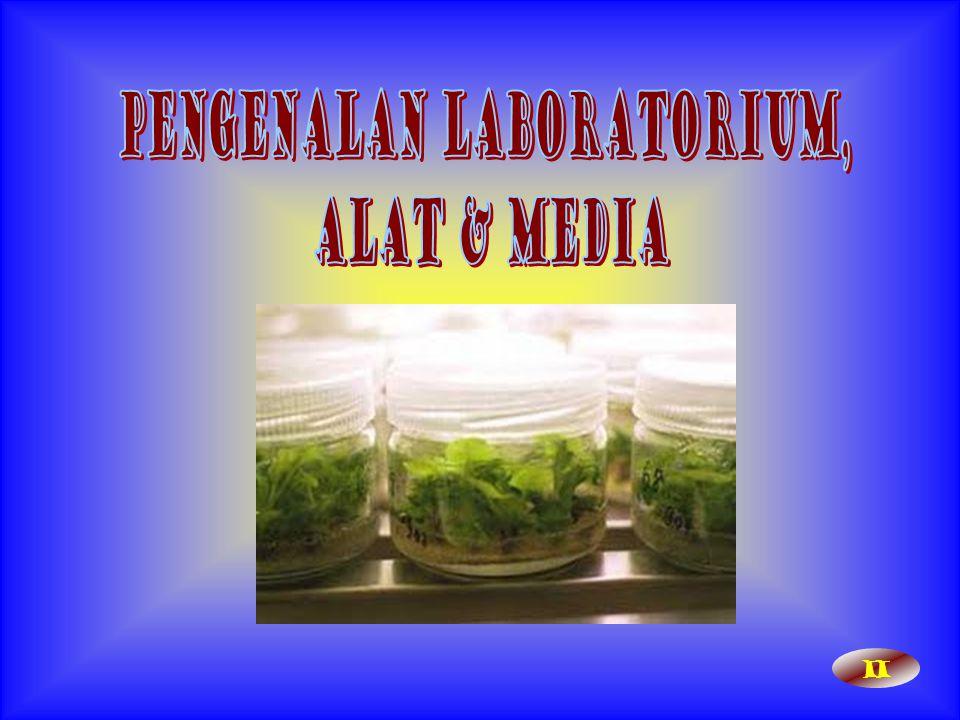 Kegiatan kultur jaringan di dalam laboratorium: 1.Persiapan media dan bahan tanaman.