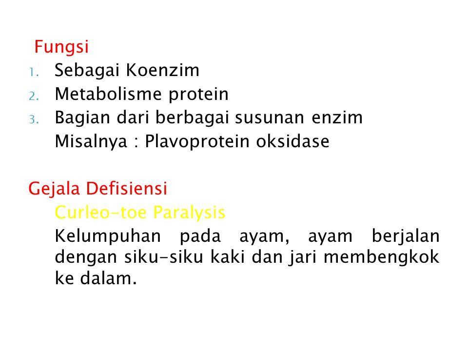 Fungsi 1.Sebagai Koenzim 2. Metabolisme protein 3.