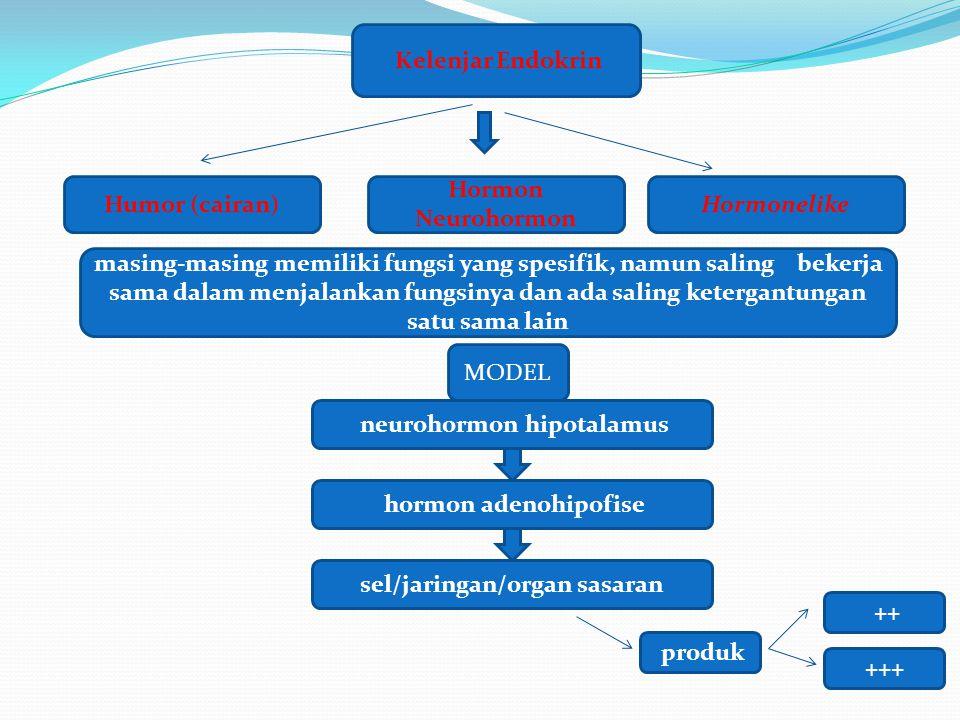 Kelenjar Endokrin Hormon Neurohormon Humor (cairan)Hormonelike masing-masing memiliki fungsi yang spesifik, namun saling bekerja sama dalam menjalanka