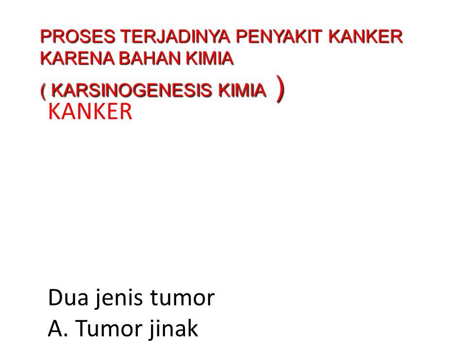 KANKER Dua jenis tumor A.Tumor jinak (tahi lalat, kista dll) B.