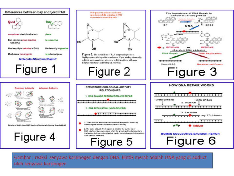 Gambar : reaksi senyawa karsinogen dengan DNA.