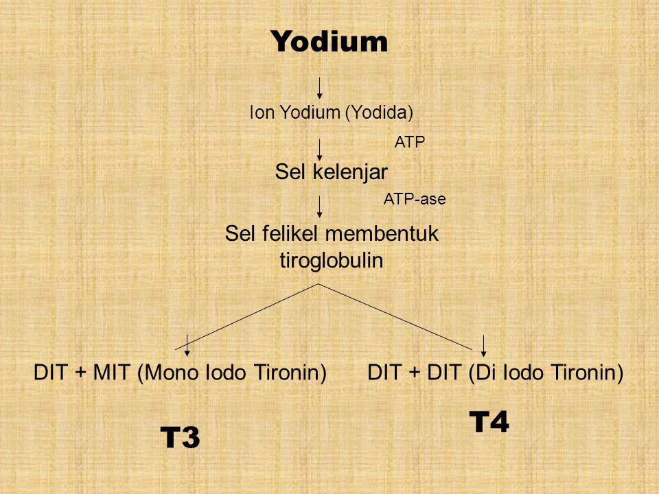 Yodium Ion Yodium (Yodida) Sel kelenjar Sel felikel membentuk tiroglobulin DIT + MIT (Mono Iodo Tironin)DIT + DIT (Di Iodo Tironin) T3 T4 ATP ATP-ase