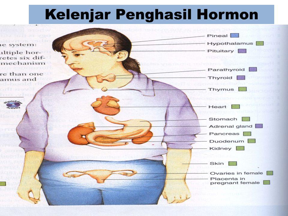 Kelenjar Penghasil Hormon