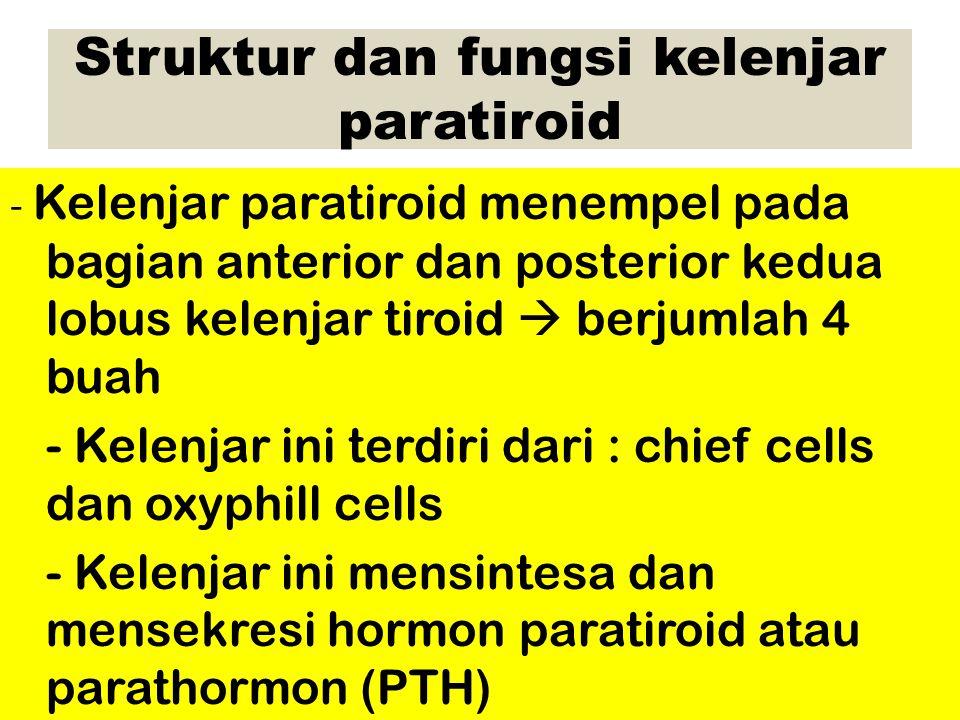 Struktur dan fungsi kelenjar paratiroid - Kelenjar paratiroid menempel pada bagian anterior dan posterior kedua lobus kelenjar tiroid  berjumlah 4 buah - Kelenjar ini terdiri dari : chief cells dan oxyphill cells - Kelenjar ini mensintesa dan mensekresi hormon paratiroid atau parathormon (PTH)