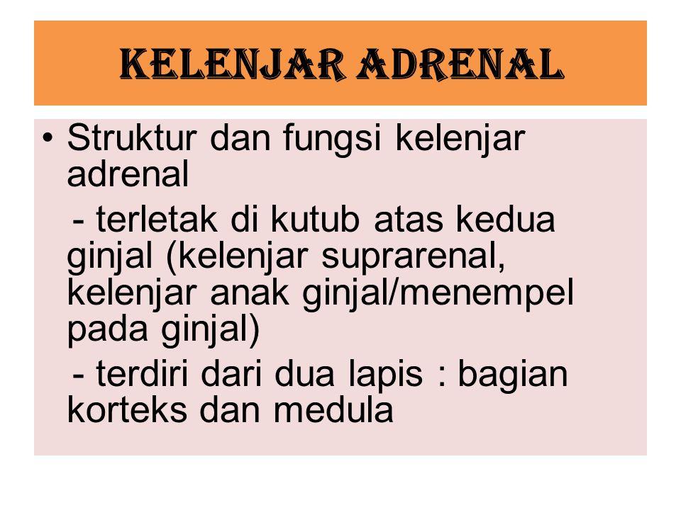 KELENJAR ADRENAL Struktur dan fungsi kelenjar adrenal - terletak di kutub atas kedua ginjal (kelenjar suprarenal, kelenjar anak ginjal/menempel pada ginjal) - terdiri dari dua lapis : bagian korteks dan medula