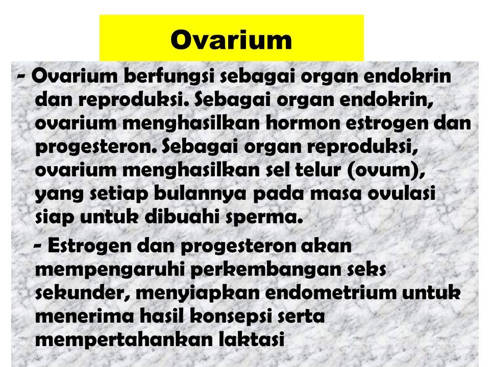 Ovarium - Ovarium berfungsi sebagai organ endokrin dan reproduksi. Sebagai organ endokrin, ovarium menghasilkan hormon estrogen dan progesteron. Sebag