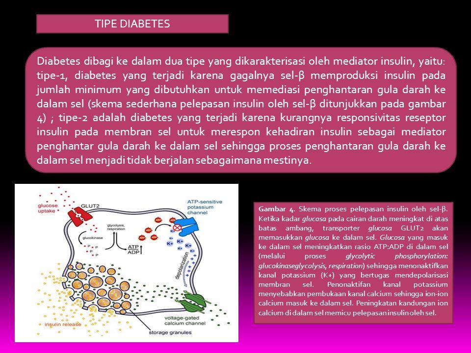 TIPE DIABETES Diabetes dibagi ke dalam dua tipe yang dikarakterisasi oleh mediator insulin, yaitu: tipe-1, diabetes yang terjadi karena gagalnya sel-β