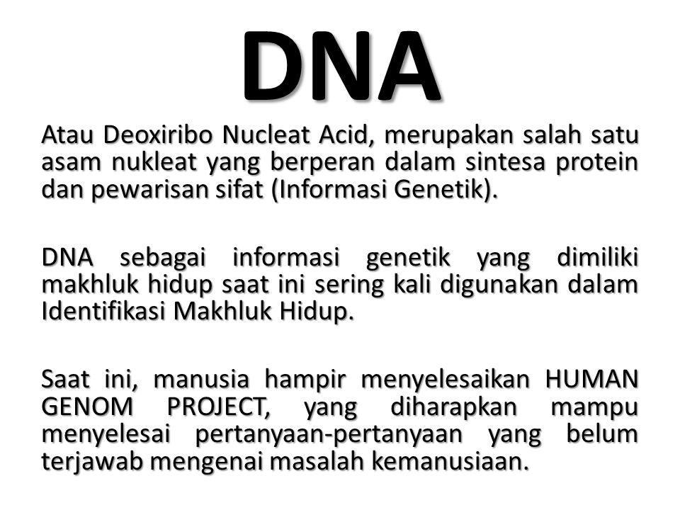 CIRI-CIRI DNA Rantai Panjang Rantai Panjang Double Helix (berpilin ganda) Double Helix (berpilin ganda) Tersusun atas nukleotida dan nukleosida Tersusun atas nukleotida dan nukleosida Terdapat 2 jenis basa : Terdapat 2 jenis basa : – Basa Purin: Adenin (A) dan Cytocin (C) – Basa Pirimidin: Timin (T) dan Guanin (G) Berikatan dengan atom hidrogen, untuk ikatan antara A dan T berikatan dengan 2 atom Hidrogen, sedangkan C dan G berikatan dengan 3 atom Hidrogen.