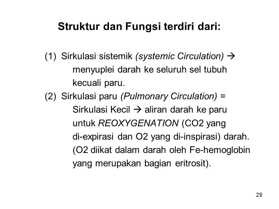 29 Struktur dan Fungsi terdiri dari: (1) Sirkulasi sistemik (systemic Circulation)  menyuplei darah ke seluruh sel tubuh kecuali paru. (2) Sirkulasi