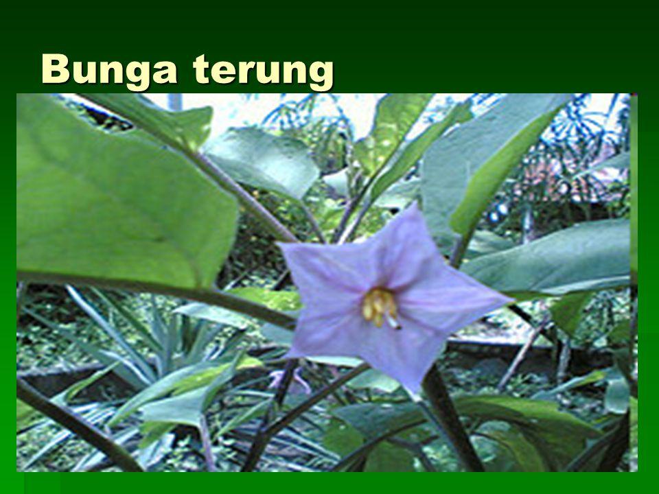 Bunga terung
