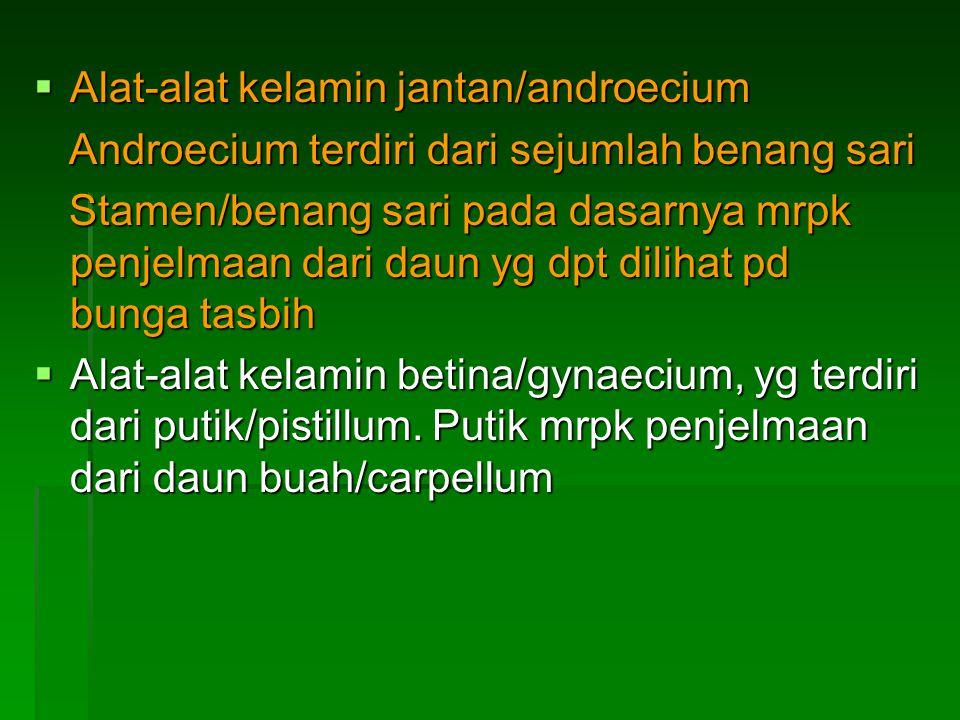  Alat-alat kelamin jantan/androecium Androecium terdiri dari sejumlah benang sari Androecium terdiri dari sejumlah benang sari Stamen/benang sari pad
