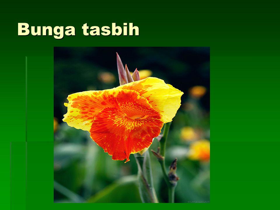 Bunga tasbih