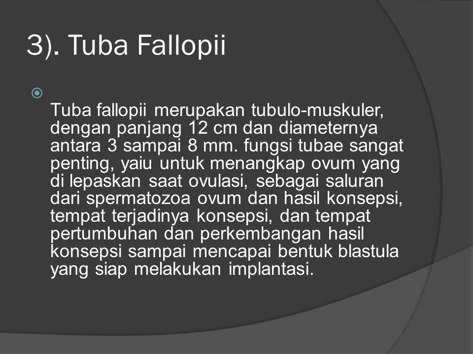 3). Tuba Fallopii  Tuba fallopii merupakan tubulo-muskuler, dengan panjang 12 cm dan diameternya antara 3 sampai 8 mm. fungsi tubae sangat penting, y