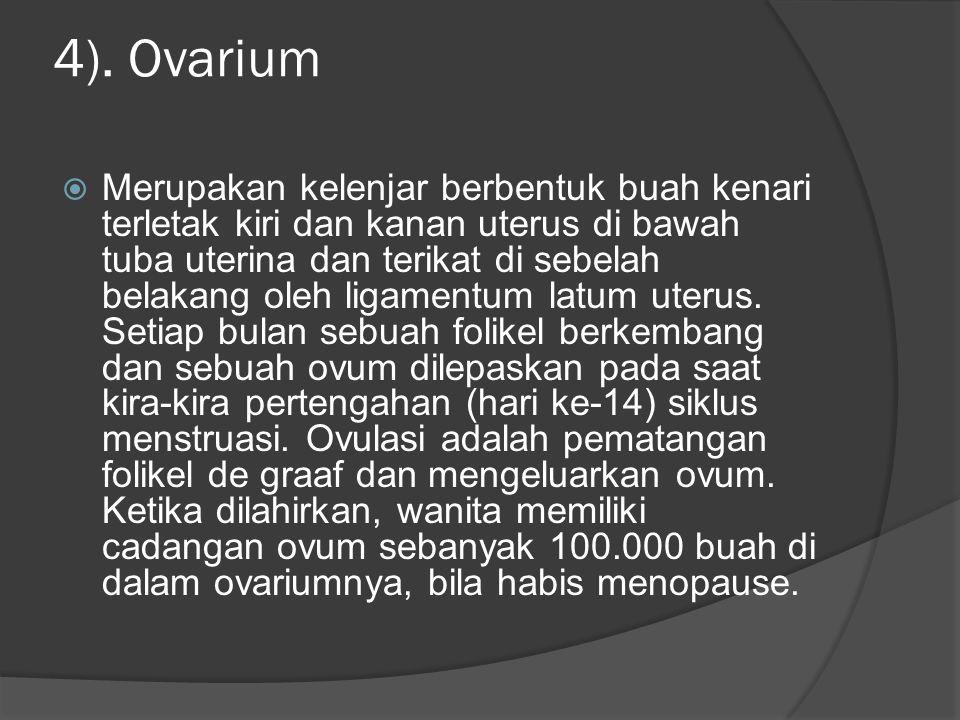 4). Ovarium  Merupakan kelenjar berbentuk buah kenari terletak kiri dan kanan uterus di bawah tuba uterina dan terikat di sebelah belakang oleh ligam