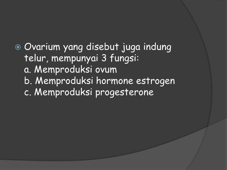  Ovarium yang disebut juga indung telur, mempunyai 3 fungsi: a. Memproduksi ovum b. Memproduksi hormone estrogen c. Memproduksi progesterone