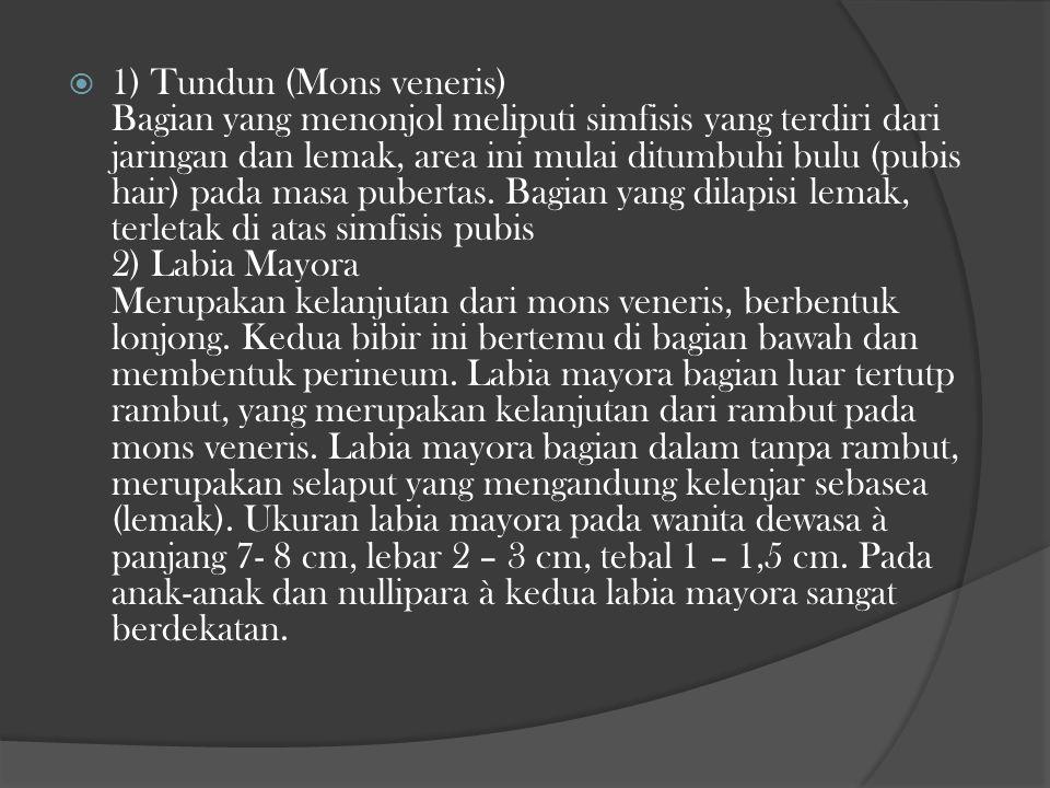 Mons veneris Labia Mayora
