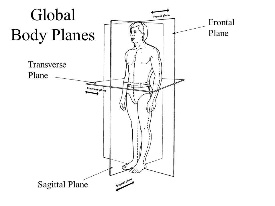 Transverse Plane Frontal Plane Sagittal Plane Global Body Planes