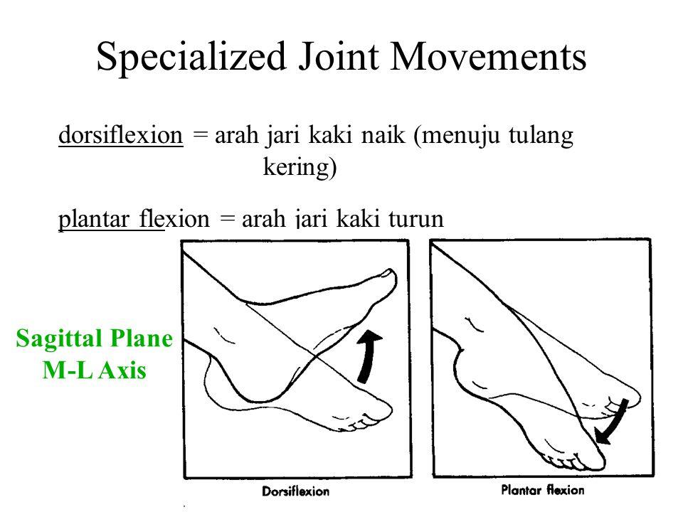 Specialized Joint Movements dorsiflexion = arah jari kaki naik (menuju tulang kering) plantar flexion = arah jari kaki turun Sagittal Plane M-L Axis
