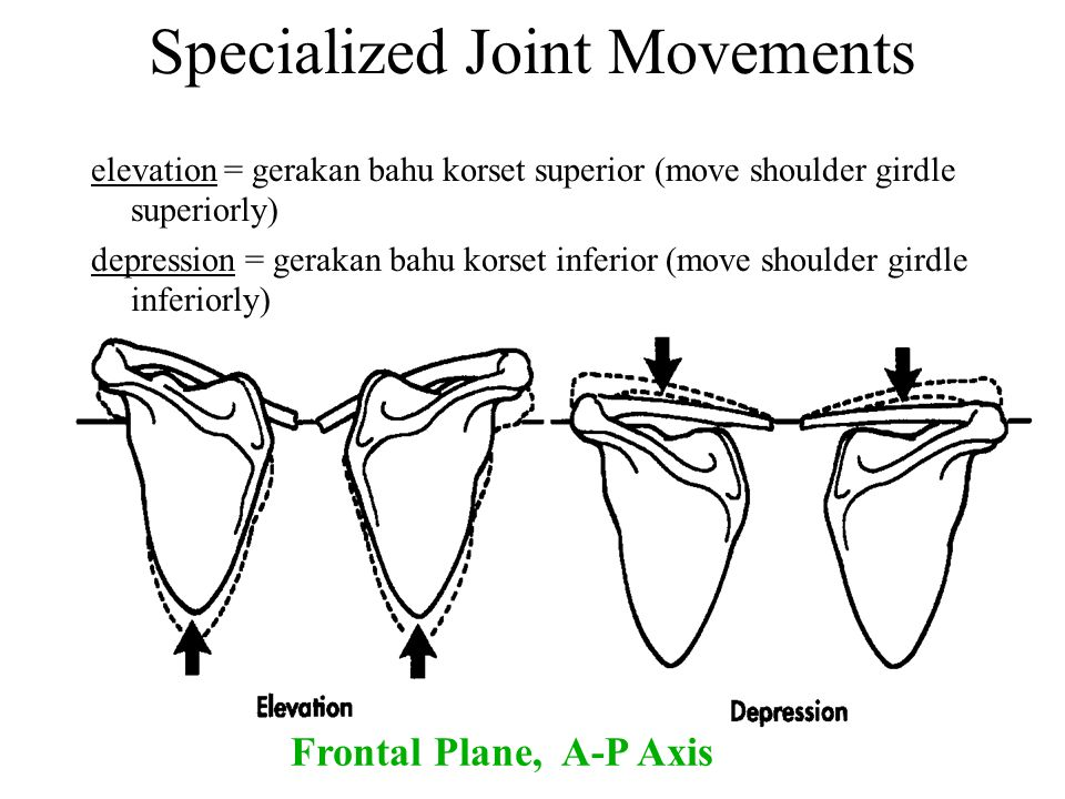 Specialized Joint Movements elevation = gerakan bahu korset superior (move shoulder girdle superiorly) depression = gerakan bahu korset inferior (move
