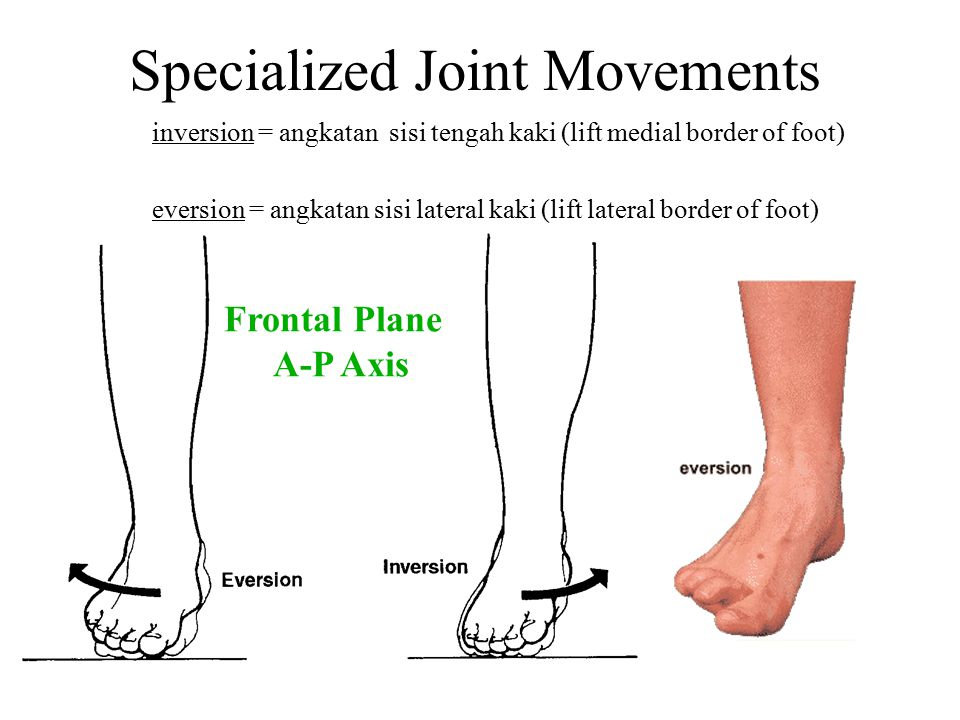 Specialized Joint Movements inversion = angkatan sisi tengah kaki (lift medial border of foot) eversion = angkatan sisi lateral kaki (lift lateral bor