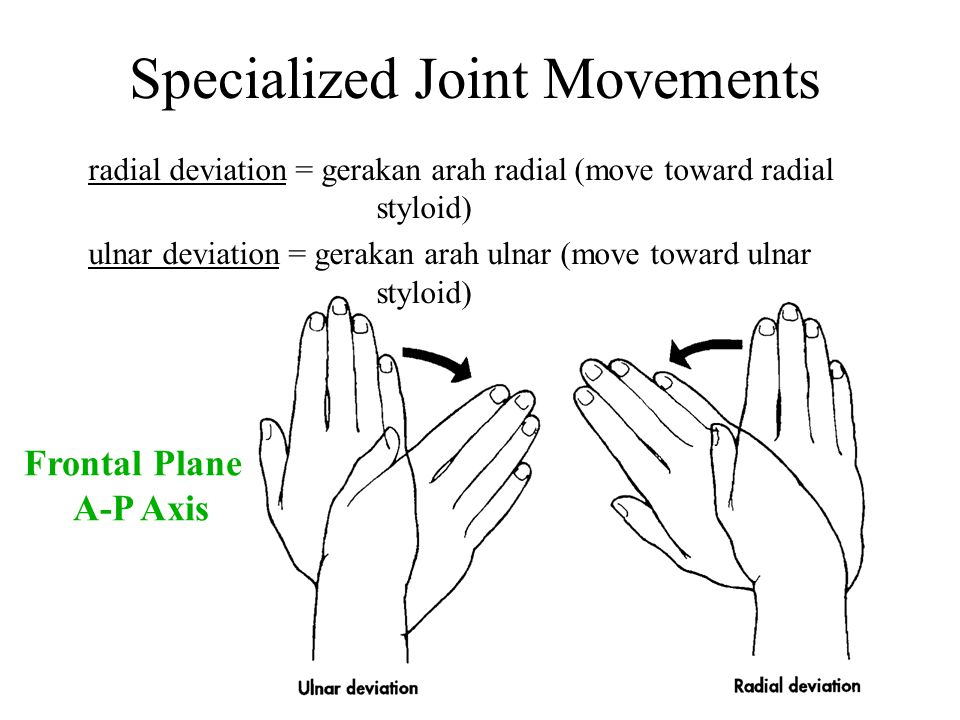 Specialized Joint Movements radial deviation = gerakan arah radial (move toward radial styloid) ulnar deviation = gerakan arah ulnar (move toward ulna