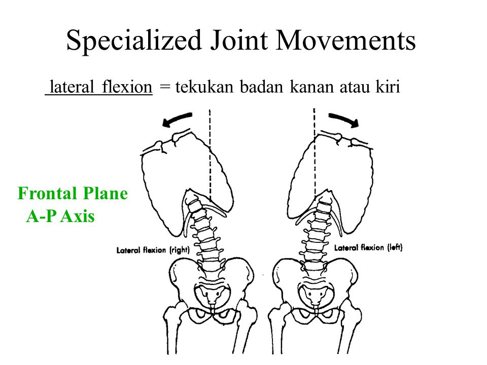 Specialized Joint Movements lateral flexion = tekukan badan kanan atau kiri Frontal Plane A-P Axis