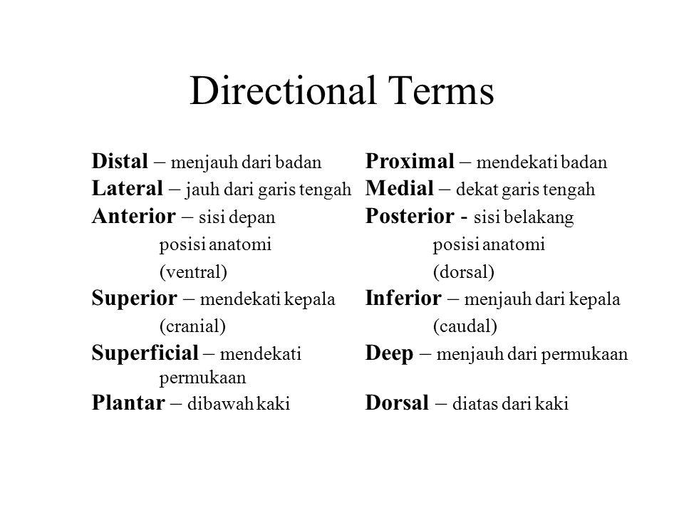 Directional Terms Distal – menjauh dari badan Proximal – mendekati badan Lateral – jauh dari garis tengah Medial – dekat garis tengah Anterior – sisi
