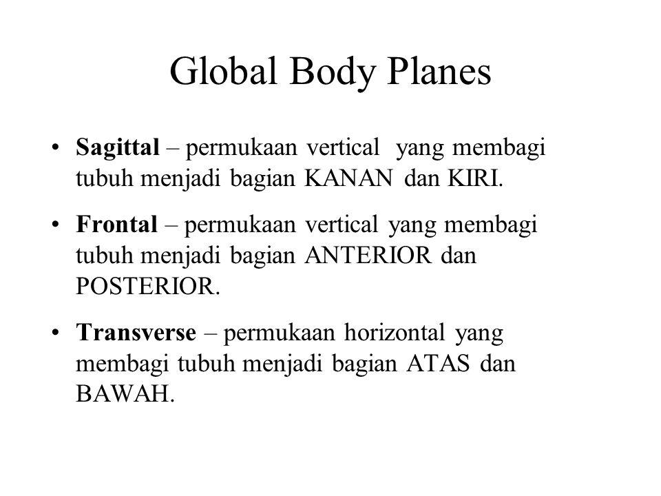 Global Body Planes Sagittal – permukaan vertical yang membagi tubuh menjadi bagian KANAN dan KIRI. Frontal – permukaan vertical yang membagi tubuh men