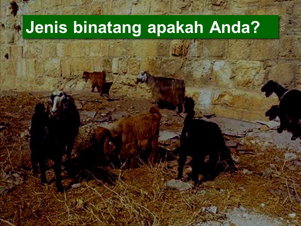 Jenis binatang apakah Anda?