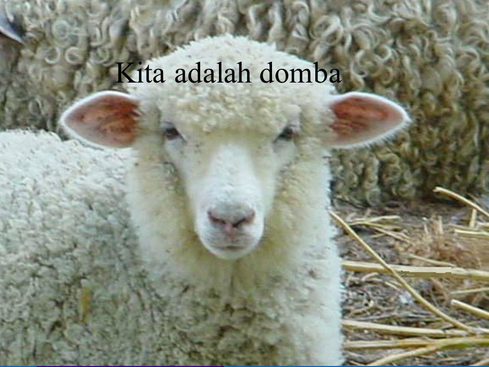 Kita adalah domba