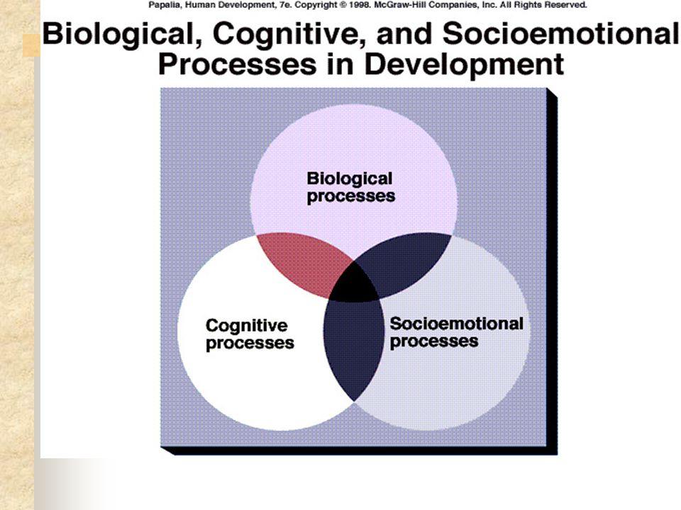 Ranah perkembangan dipisahkan secara fisik, kognitif dan psikososial/sosial emosional Perkembangan fisik: pertumbuhan tubuh & otak dan perubahan dan stabilitas dalam kapasitas sensorik, ketrampilan, motorik dan kesehatan.