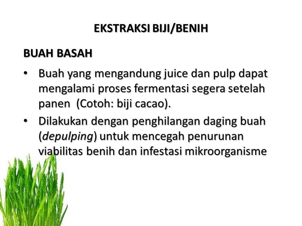 BUAH BASAH Buah yang mengandung juice dan pulp dapat mengalami proses fermentasi segera setelah panen (Cotoh: biji cacao).