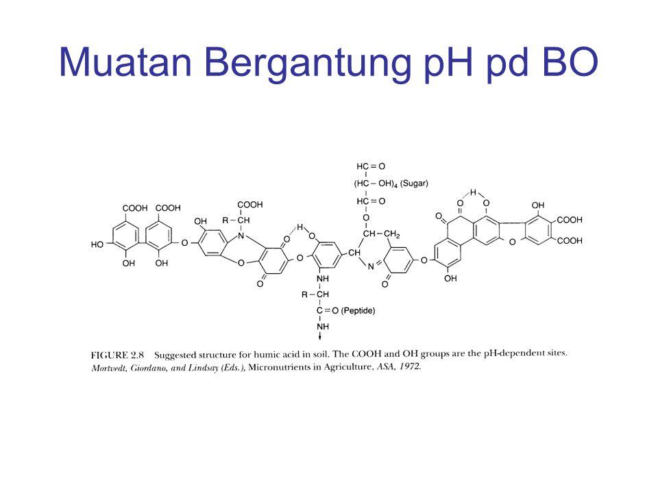 + OH - pH meningkat + H 2 O OH Gugus Fenol O¯O¯ + OH - pH meningkat + H 2 O OH Gugus karboksil O¯O¯ R =O