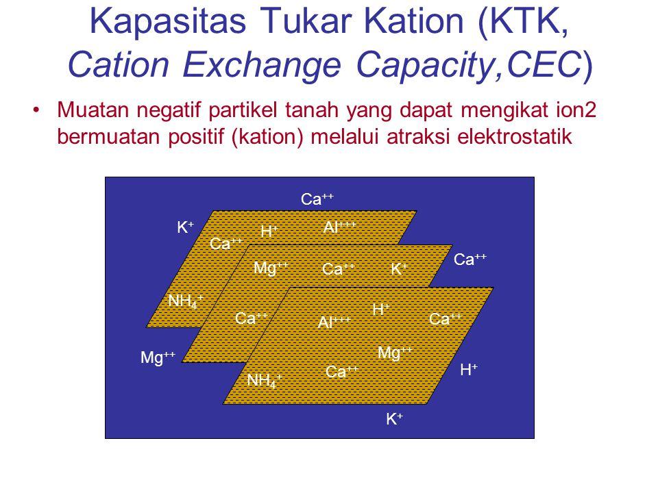 Kapasitas Tukar Kation (KTK) Sumber Muatan pada Liat –Lempeng silikat – (review struktur dlm textbook) Silika tetrahedral Aluminum oktahedral –Substitusi Isomorfik Al 3+ untuk Si 4+ pd lempeng tetrahedral = muatan -1 Mg 2+ untuk Fe 2+ untuk Al 3+ pd lempeng oktahedral = muatan -1 Luas Permukaan 10 – 800 m 2 /g 1 lempung berpasir Illnois = 40 - 50 x luasan